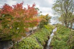 Arbres d'automne avec coloré dans Kawaguchiko, Japon image stock