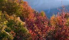 Arbres d'automne avec des feuilles de rouge et de jaune dans la perspective des montagnes photos libres de droits