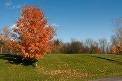 Arbres d'automne avec des lames sur la prise de masse Photographie stock libre de droits
