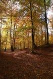 Arbres d'automne avec les lames colorées Images stock