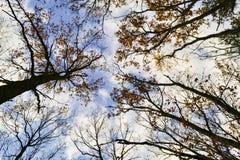 Arbres d'automne contre le ciel et les nuages image libre de droits