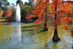 Arbres d'automne dans l'eau Image libre de droits
