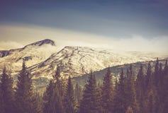 Arbres d'automne dans la forêt et montagne couverte de neige dans la distance Images stock