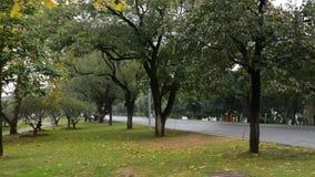 Arbres d'automne dans le jardin banque de vidéos