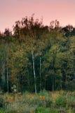 Arbres d'automne dans le vent. Photos libres de droits