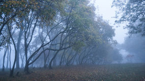 Arbres d'automne dans un brouillard images stock