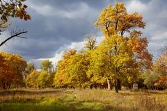 Arbres d'automne de couleur d'or image stock