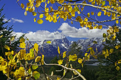 Arbres d'automne devant des montagnes Photographie stock