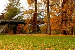Arbres d'automne en parc Photos stock