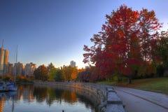 Arbres d'automne en parc Photographie stock