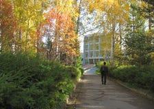 Arbres d'automne et ciel bleu Photo libre de droits
