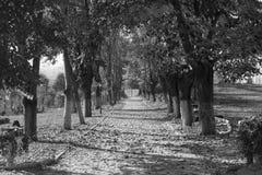 Arbres d'automne noirs et blancs Photographie stock