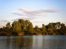 Arbres d'automne ou d'été sur le côté de rivière images libres de droits