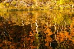 Arbres d'automne reflétés dans le lac Photos stock