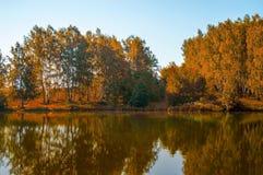 Arbres d'automne reflétés dans un lac de forêt Photo libre de droits