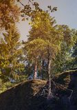 Arbres d'automne s'élevant sur une roche Photo libre de droits
