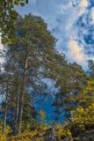Arbres d'automne s'élevant sur une roche Photographie stock
