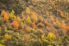 Arbres d'automne sur le flanc de coteau Arrowtown image libre de droits