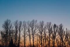 Arbres d'automne sur le fond de coucher du soleil Photo stock