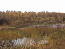 Arbres d'automne sur le rivage d'un lac de forêt contre un ciel orageux Images stock