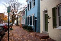 Arbres d'automne sur une rue à Washington Image stock