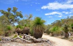 Arbres d'herbe : Australien Bushland Image stock