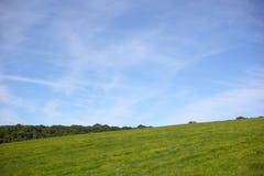 Arbres d'herbe et ciel bleu Photographie stock