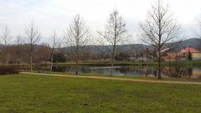Arbres d'herbe verts de nuage de lac photographie stock libre de droits