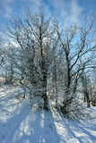 Arbres d'hiver Images libres de droits