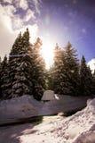 Arbres d'hiver avec le soleil Image libre de droits