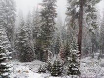 Arbres d'hiver dans la neige Image libre de droits