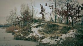 Arbres d'hiver près de la rivière, jour, extérieur Images stock