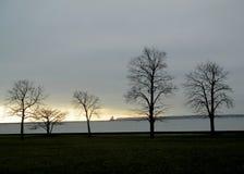 Arbres d'hiver sur le lac Michigan photographie stock