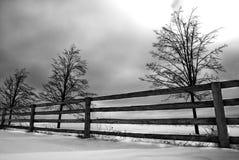 Arbres d'horizontal de l'hiver Photographie stock libre de droits