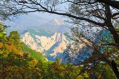 Arbres d'ombrage de montagnes Images libres de droits