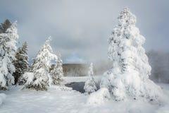 Arbres d'ordinateur de secours et regroupement thermique, Yellowstone Image stock