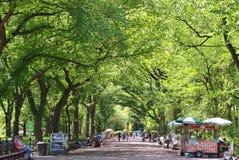 Arbres d'orme américain dans le Central Park Image libre de droits