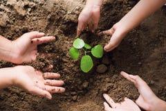 arbres d'usine d'aide de groupe de main de personnes à aider à réduire global Photographie stock libre de droits