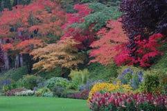 Arbres dans des jardins de Butchart Photo libre de droits
