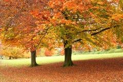 Arbres dans l'automne Photo libre de droits