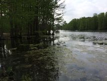 Arbres dans l'eau et la boue photographie stock libre de droits