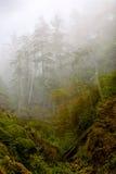 Arbres dans la brume Photographie stock