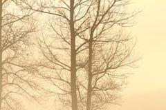 Arbres dans la brume Images stock