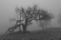 Arbres dans la brume Photo libre de droits