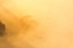 Arbres dans la brume avec la lumière d'or. Photographie stock
