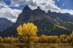 Arbres dans la couleur d'automne Images stock
