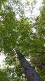 Arbres dans la forêt Photo libre de droits