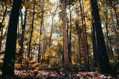 Arbres dans la forêt Photos stock