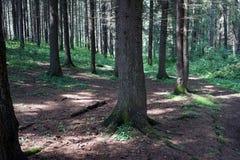 Arbres dans la forêt Image stock