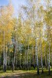 Arbres dans la forêt Images libres de droits
